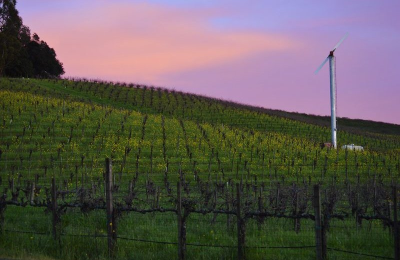 purple and pink sky over Napa Valley vineyards