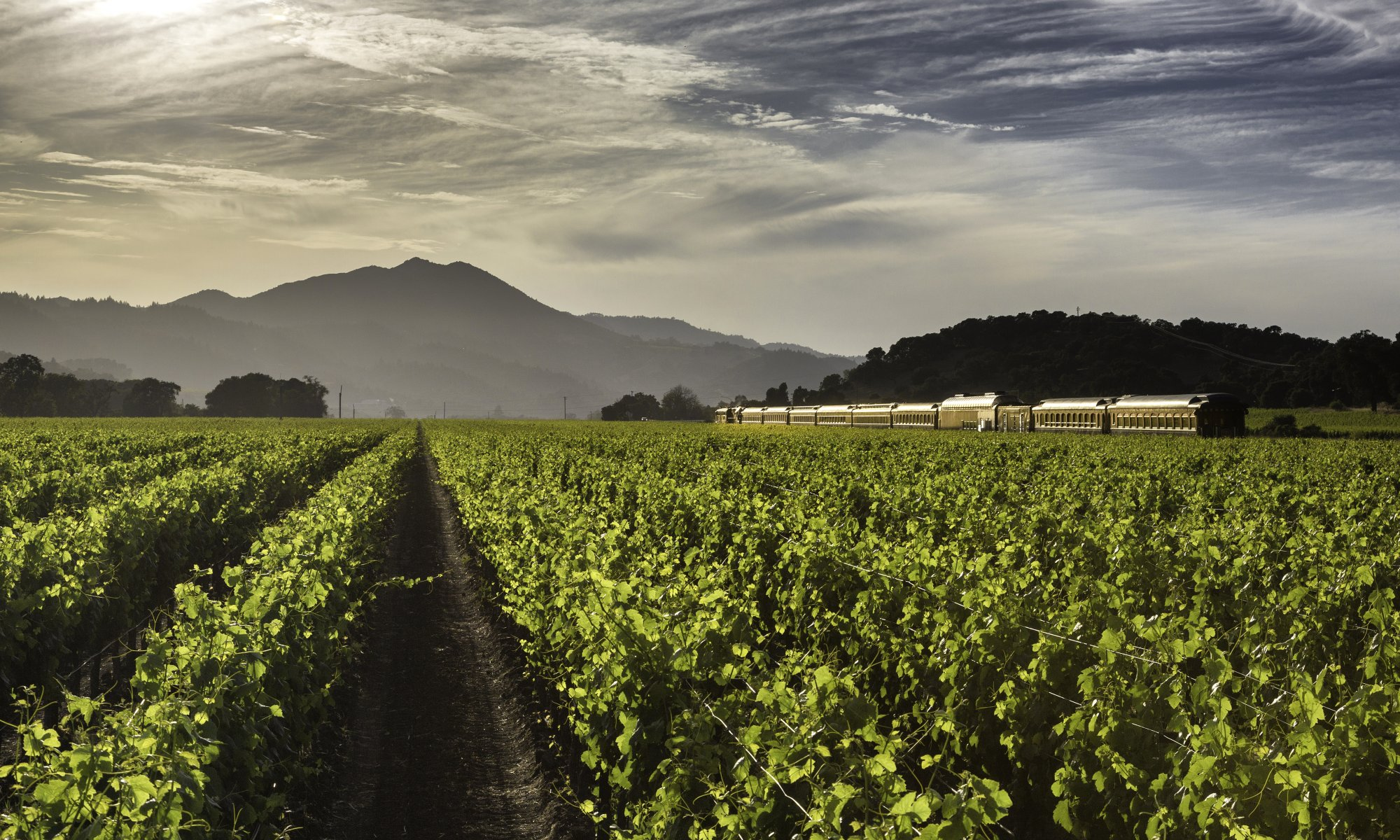 The Napa Valley Wine Train journeys alongside a lush green vineyard in summer.