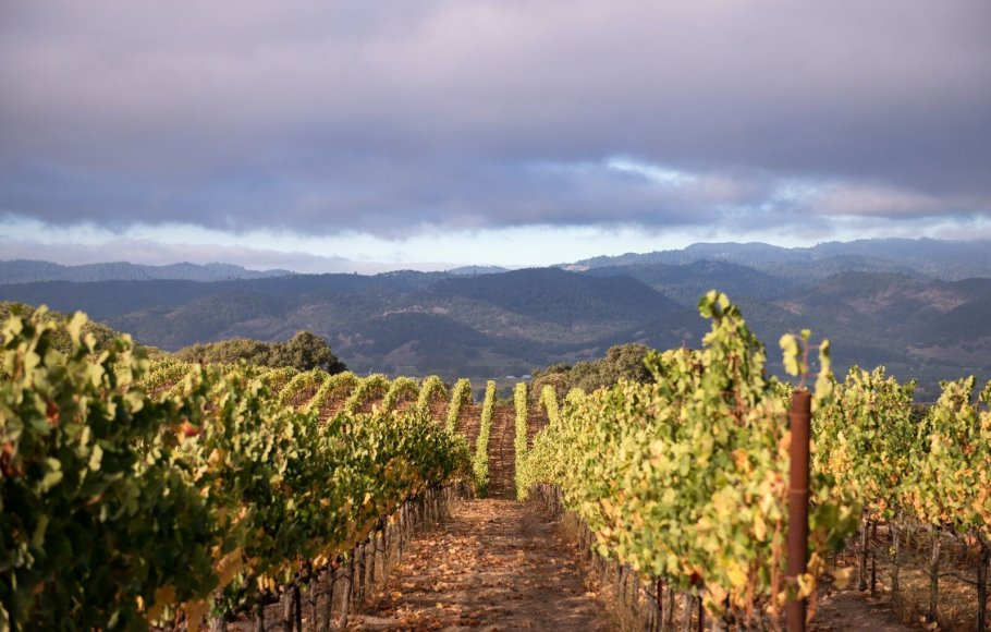 Rolling hills at Raymond vineyard in Napa Valley