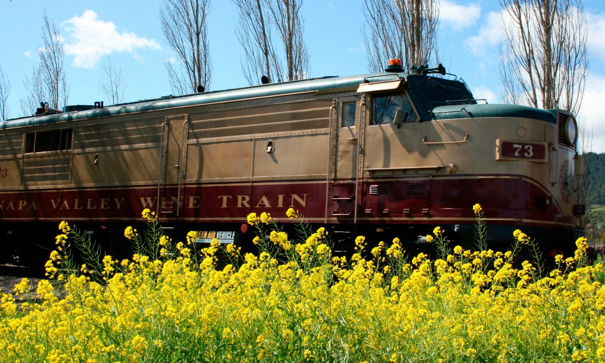 The Napa Valley Wine Train goes by a field of yellow mustard blooms.