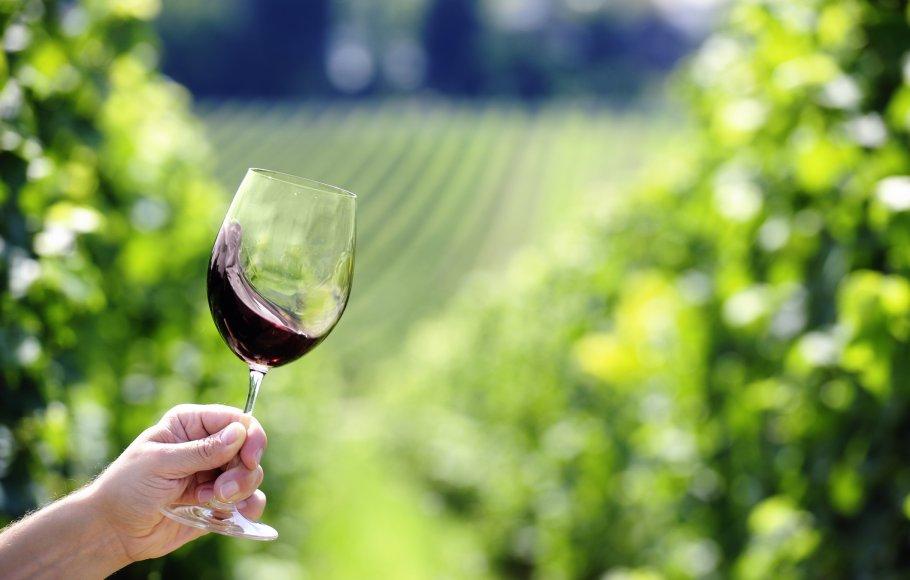 Red wine swiveling inside a glass, vineyard in background