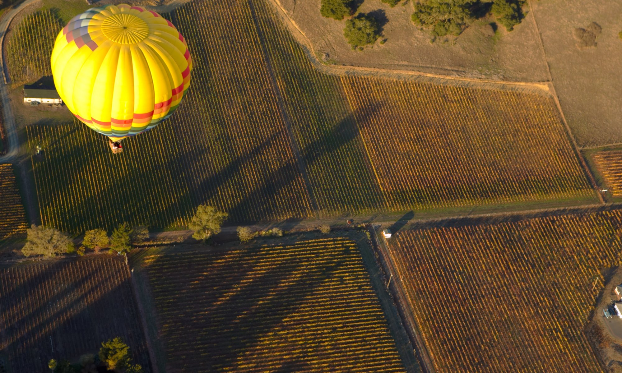 Yellow hot air balloon flying over vast fields of vineyards in Napa Valley